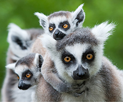 Madagascar_33507705_Gallery_Featured