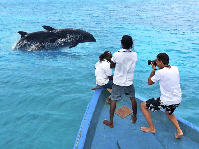 Maldive Cococoonmaldives Delfini