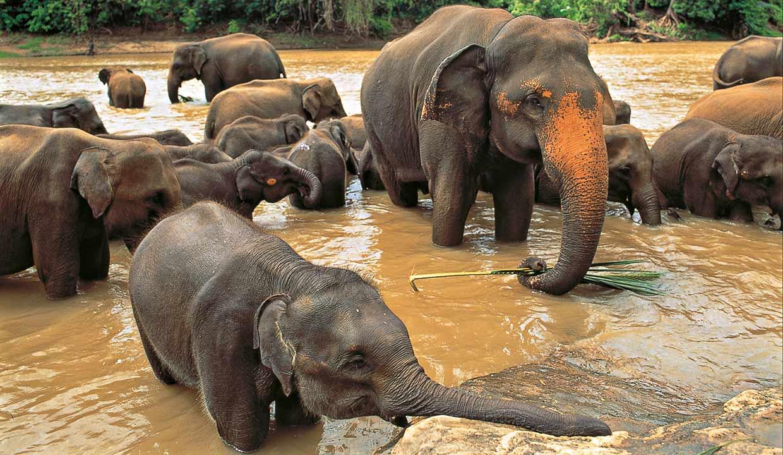 SriLanka_TourAnticheCapitali8gg7nts_top