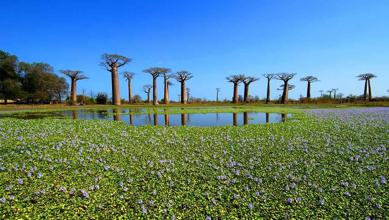 Madagascar_7159734