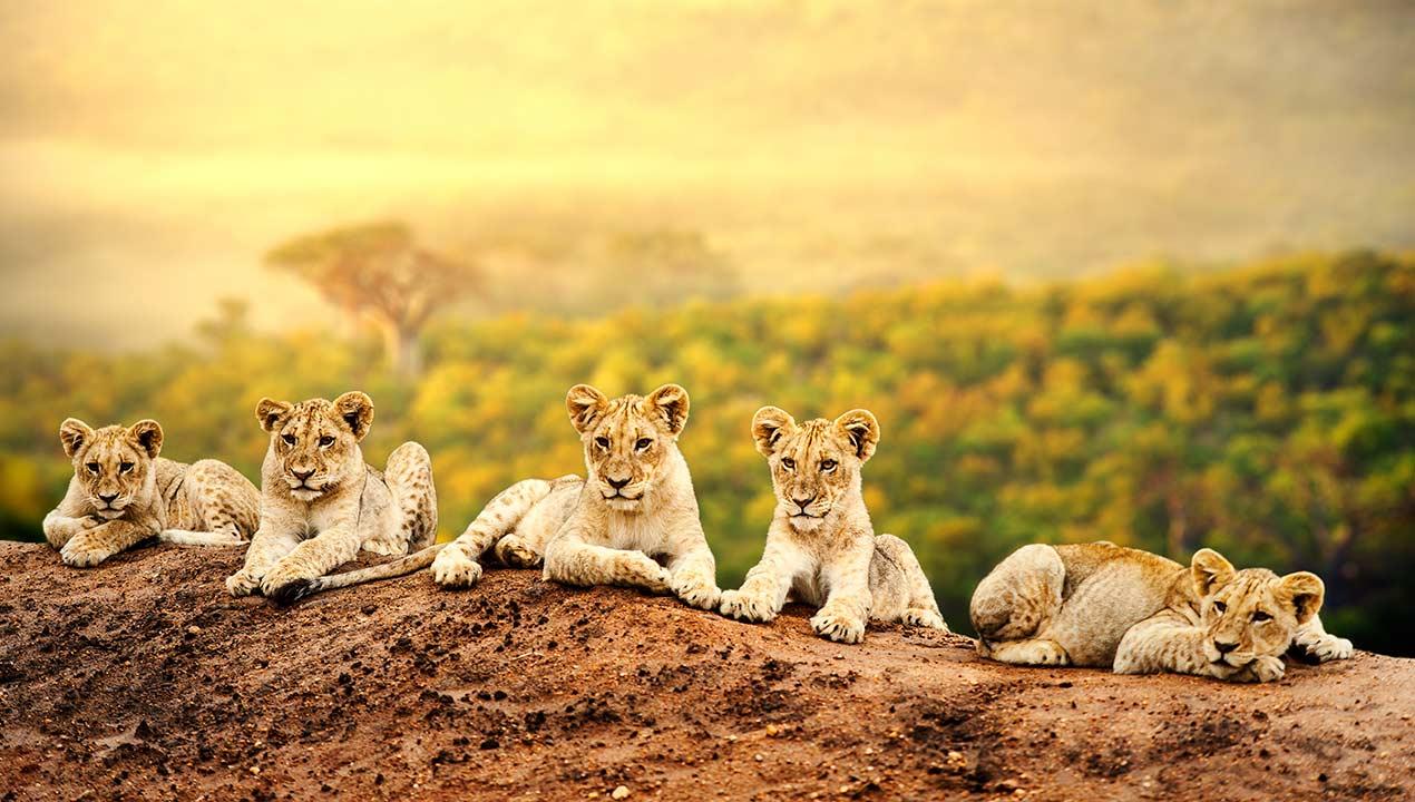 Safari_62139842_Gallery_Top
