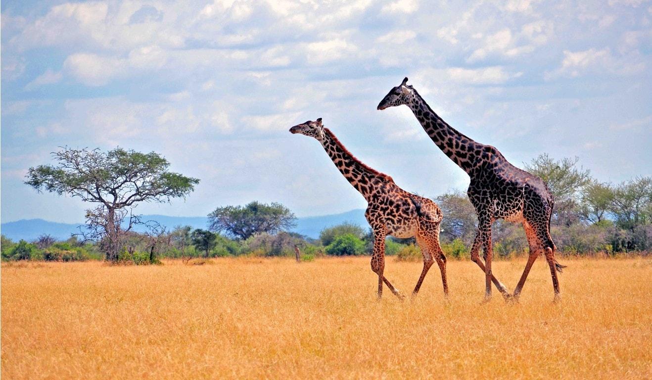319730-safari-min