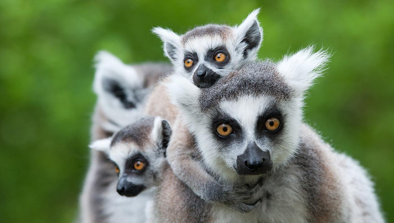 Madagascar_33507705_Gallery_Top