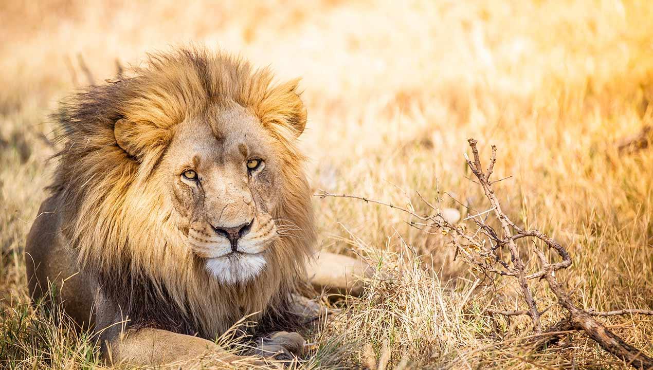 Safari_113917979_Gallery_Top