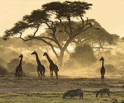 Feat Safari New